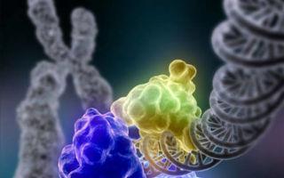 Генетическая память бактерий – доказанная реальность