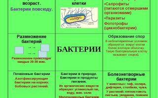 Особенности деления бактерий на группы