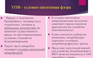 Условно-патогенная флора у женщин: основные риски для женского здоровья