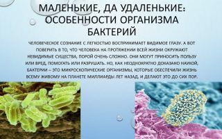 Маленькие, да удаленькие: особенности организма бактерий