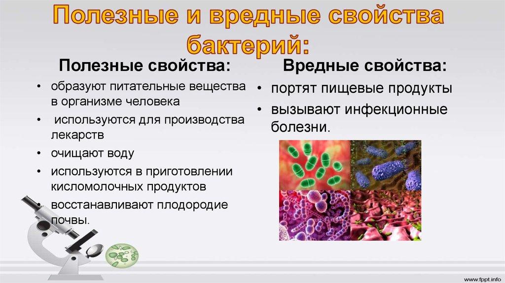 Польза и вред бактерий 5 класс