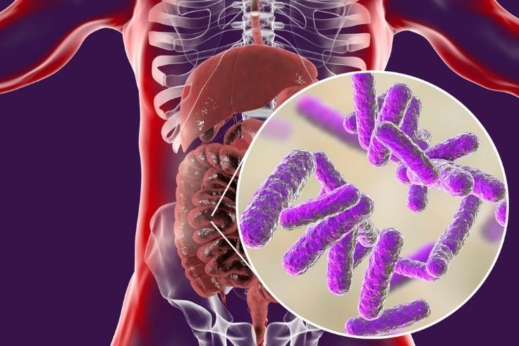 Бифидобактерии в организме человека