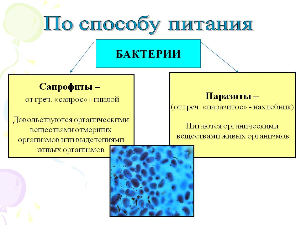 Грибы сапрофиты и паразиты