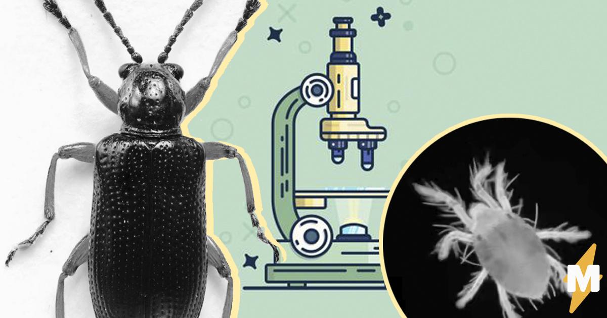 В какой микроскоп можно увидеть бактерии