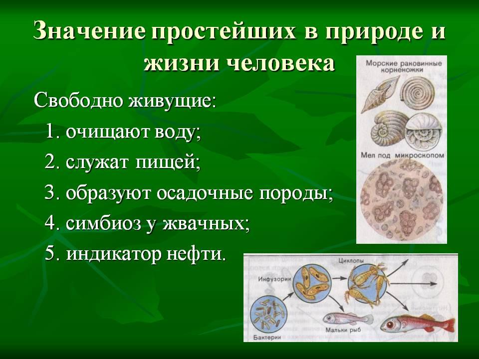 Роль и значение бактерий-сапротрофов в природе