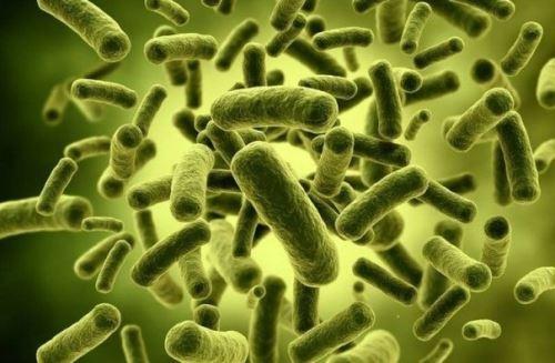 Бактерии в моче ребенка