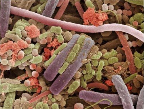 Бактерии относятся к