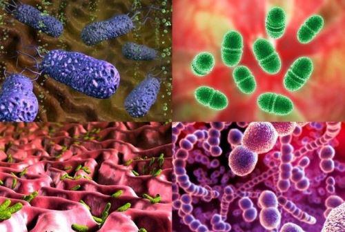 Естественная микрофлора тела человека