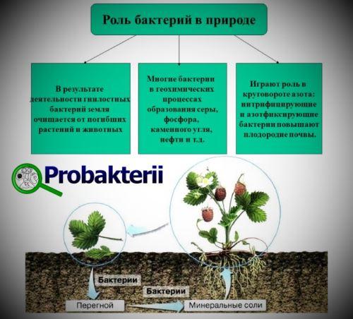 Протей википедия