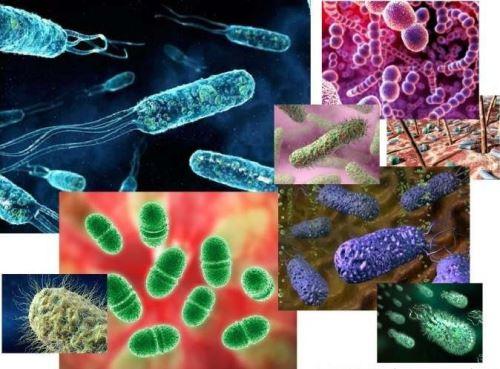 Формы бактерий и их названия
