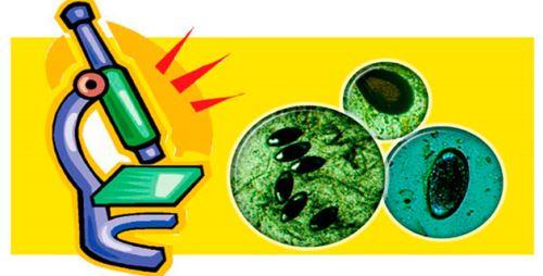 О чем говорит йодофильная флора в кале у ребенка?